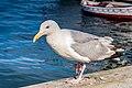 Seagull Harbour Halifax (39349556325).jpg
