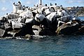 Seals, on the Rocks (15737967990).jpg