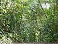 Secondary Forest (39899117842).jpg
