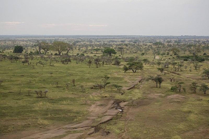800px-serengeti_national_park_15_-_landscape