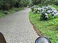 Serra da Graciosa.jgp.jpg