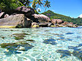 Seychelles - Acqua - Flickr - rachel thecat.jpg
