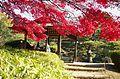 Shinjuku Gyoen(Shinjuku Imperial Garden) - 新宿御苑 - panoramio.jpg