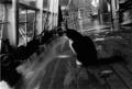 Ships Cat.png