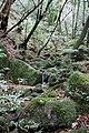 Shiratani Unsuikyo (4196787152).jpg