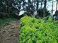 Sitargundu Estate, Kollengode South, Kerala 678508, India - panoramio (8).jpg