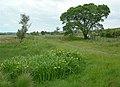Site of Glenbuck Station - geograph.org.uk - 464375.jpg