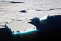 Small Tabular Icebergs (26376305448).jpg