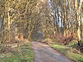 Snape Rake Lane - geograph.org.uk - 389347.jpg