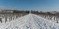 Snow-covered vineyards between Hattenheim and Hallgarten 20150201 2.jpg