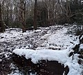 Snow and mud in Cragg Wood - geograph.org.uk - 1153704.jpg