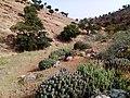Sous massa agadir morocco 2.jpg