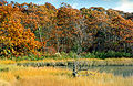 South Westport, Massachusetts, 1993 - Flickr - PhillipC (1).jpg