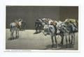 Southwestern Thoroughbreds, Burro (NYPL b12647398-66616).tiff
