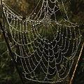 Spider-webs-belarus.JPG
