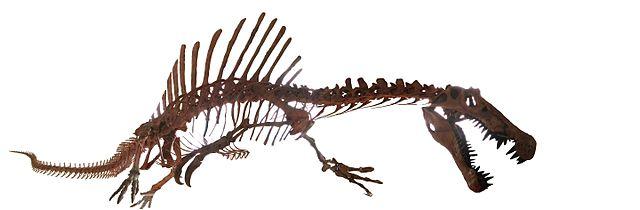 National Geographic Spinosaurus Tour Dates