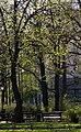 Spring at Saltykov-Shchedrin Garden, Saint Petersburg, Russia - panoramio.jpg