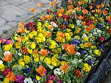 Bedding And Garden Plants