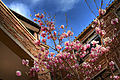 Spring has Sprung (4617295836).jpg