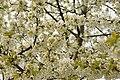 Spring in London (7119644527).jpg