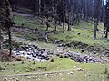 Srinagar - Pahalgam views 62.JPG