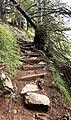 Stairs on trail.jpg