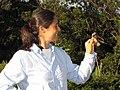 Starr-130601-4542-Lippia micromera-habitat with Kim holding House Sparrow-Hawea Pl Olinda-Maui (25184910576).jpg