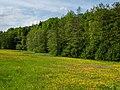 Steigerwald Weilersbachtal 5260041.jpg