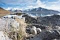 Stercoraire iceland.jpg