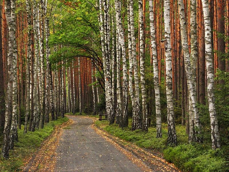 File:Stobrawski Park Krajobrazowy - okolice Zagwiździa.jpg