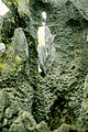 Stone forest 1983-16.jpg