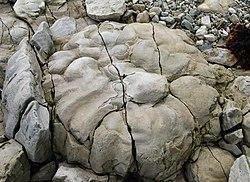 Stromatolithe, sur une plage, en Estonie.