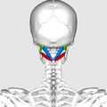 Suboccipital triangle01.png