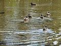 Sulphur Springs Conservation Area (44619288232).jpg