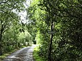 Sylvan setting - geograph.org.uk - 513305.jpg