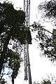 Tahune-Air walk-Tasmania-Australia03.JPG