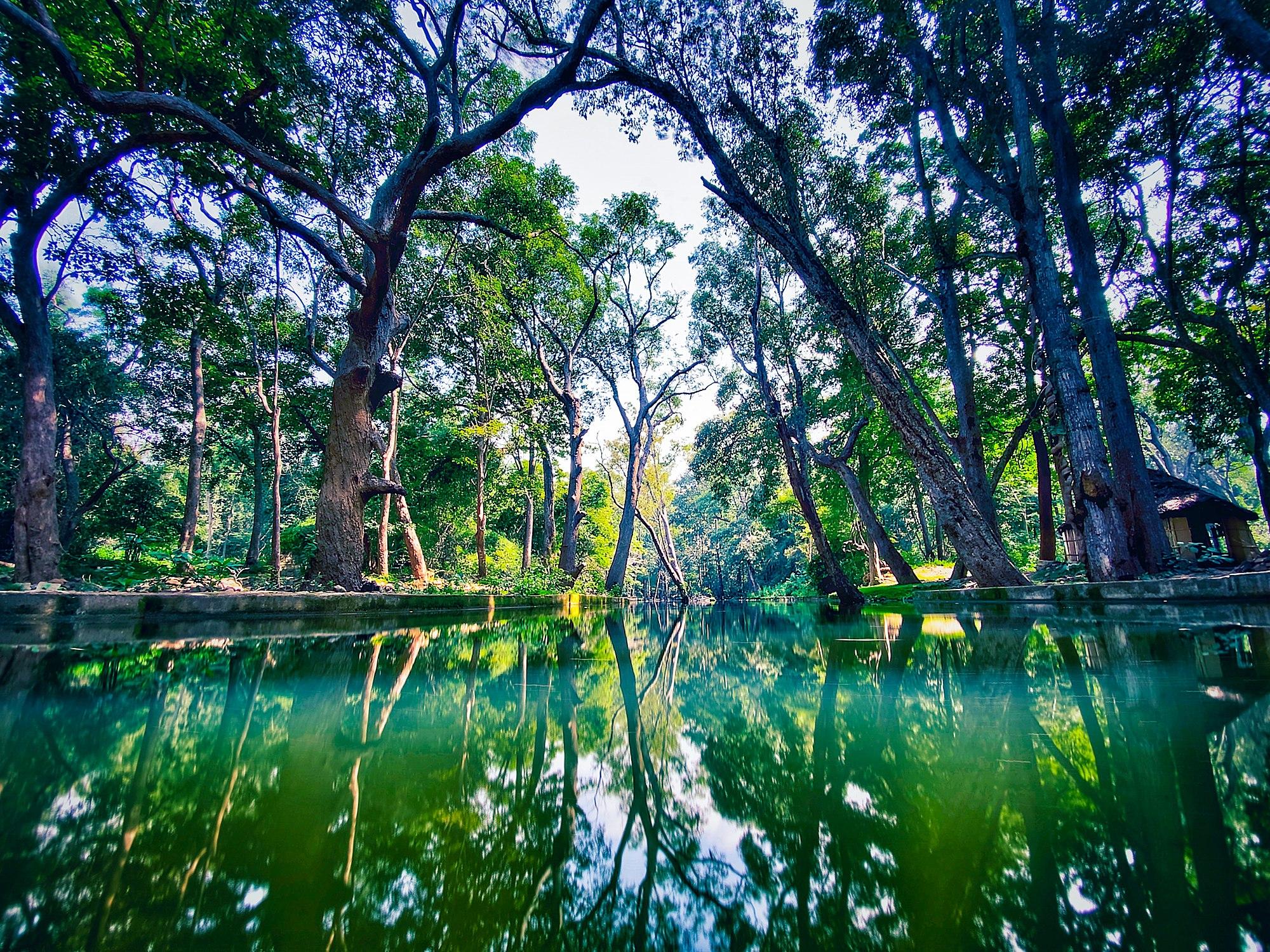 Talakona forest, Tirupati.jpg