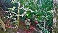 Tautpah, South Biboki, North Timor Tengah Regency, East Nusa Tenggara, Indonesia - panoramio (1).jpg
