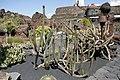 Teguise Guatiza - Jardin - Oreocereus pseudofossulatus 01 ies.jpg