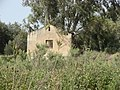 Tel Naama (Schwartz farm) 5.JPG