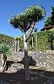 Tenerife - Icod de los Vinos - Parque del Drago 02.jpg