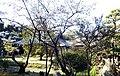 Tenpukuji 20200404 3.jpg