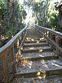 Terra Ceia FL Madira Bickel SP mound stairs02.jpg