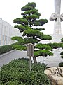 The Cenotaph for the city air-raid victims of the Pacific War 12.jpg