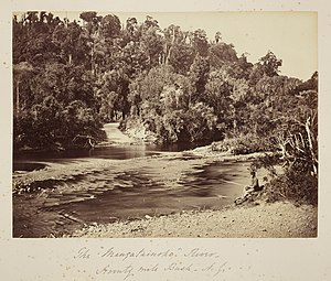 Seventy Mile Bush - The Mangatainoko River, Seventy Mile Bush, N.Z.