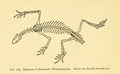 The Osteology of the Reptiles-278 kjhghjhtttt.png