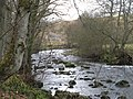 The River East Allen near Kittygreen - geograph.org.uk - 702946.jpg