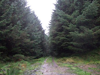 English: The deep dark forest One of the track...