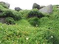 Thick moss (8045539338).jpg