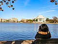 Thomas Jefferson Memorial administered by National Mall & Memorial Parks in DC. (70263fbd-059d-4473-846c-a89562ec1152).jpg